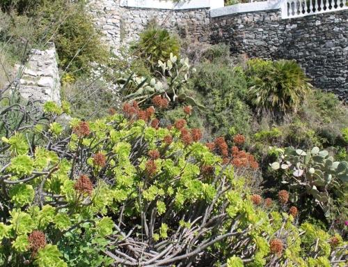 Restauración de un jardín en Playa Velilla, Almuñécar.